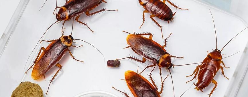 Подробно о тараканах